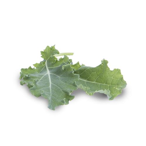 Boerenkool leaves