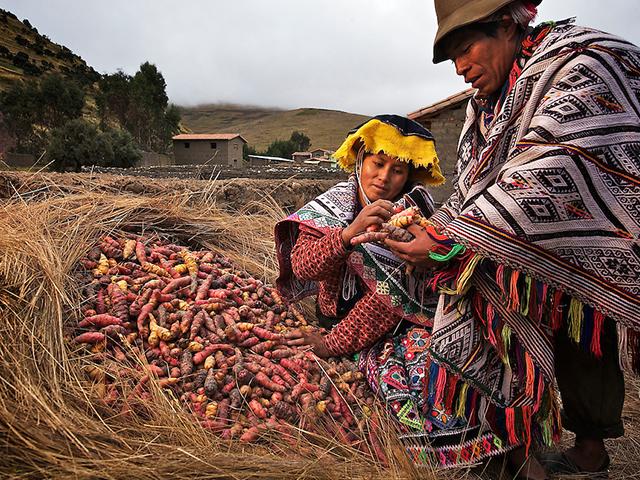 Peru Special