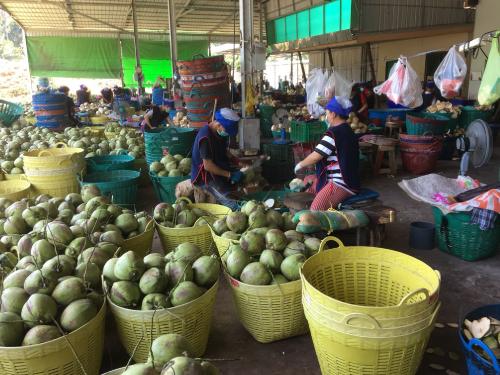 Groene kokos